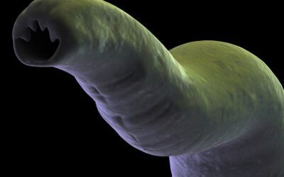Johns Hopkins scientists create parasite-inspired microdevice to gradually deliver drugs in the GI tract