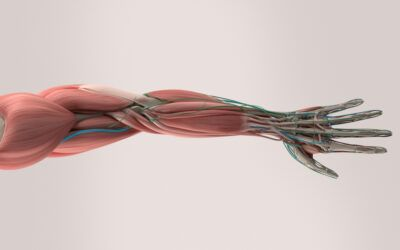 Musculoskeletal medical startups race to enter personalized health tech market